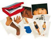 Mallette de 50 cartes-images - Le corps humain et les vêtements