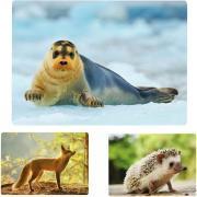 Imagier photos les animaux