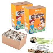 Kit de champignons bio - Lot de 2
