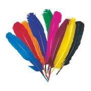 Plume indien coloris assorti -sachet de 10