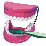 La bouche - les dents + brosse à dents géante