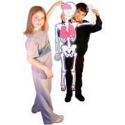 Squelette articulé - 120 cm