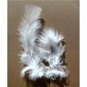 Plume de dinde blanche - Sachet de 25g