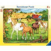 Puzzle à cadre 46 pièces, l'enclos des chevaux