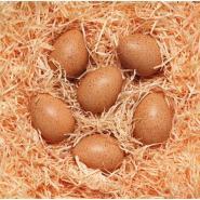 Set de 6 œufs sonores