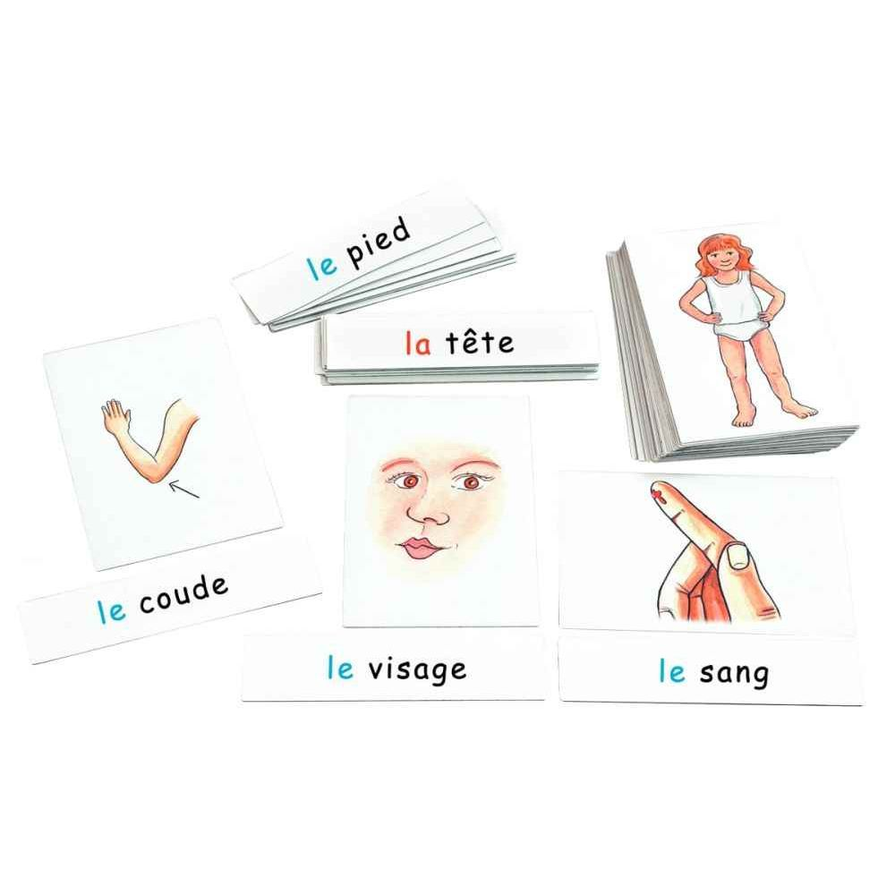 Boîte de 28 cartes le corps humain